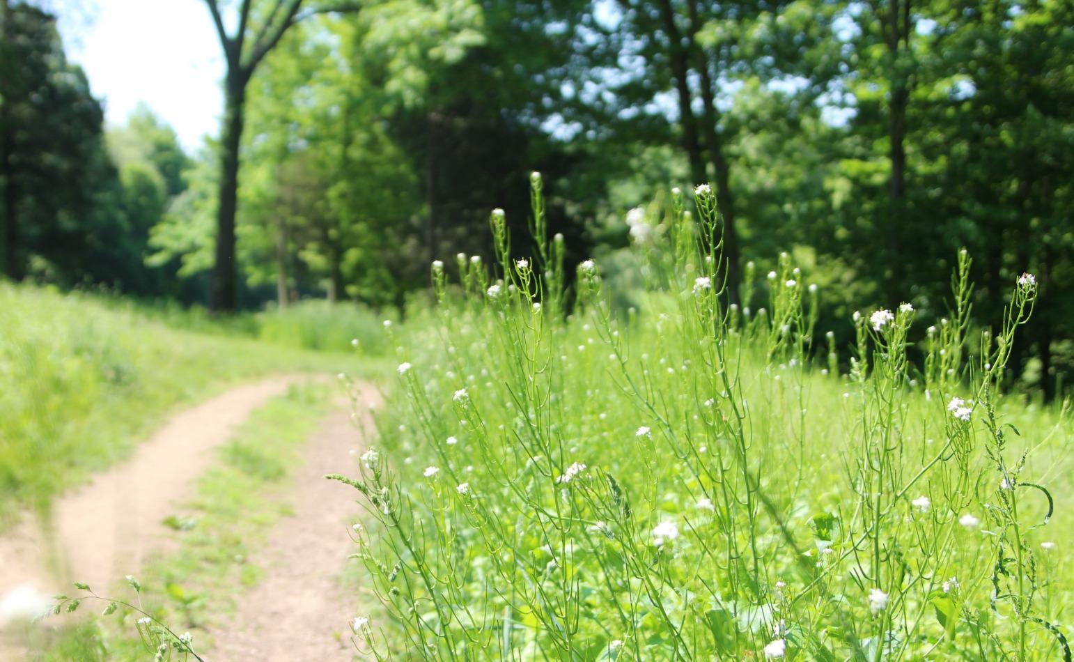 flowered-field