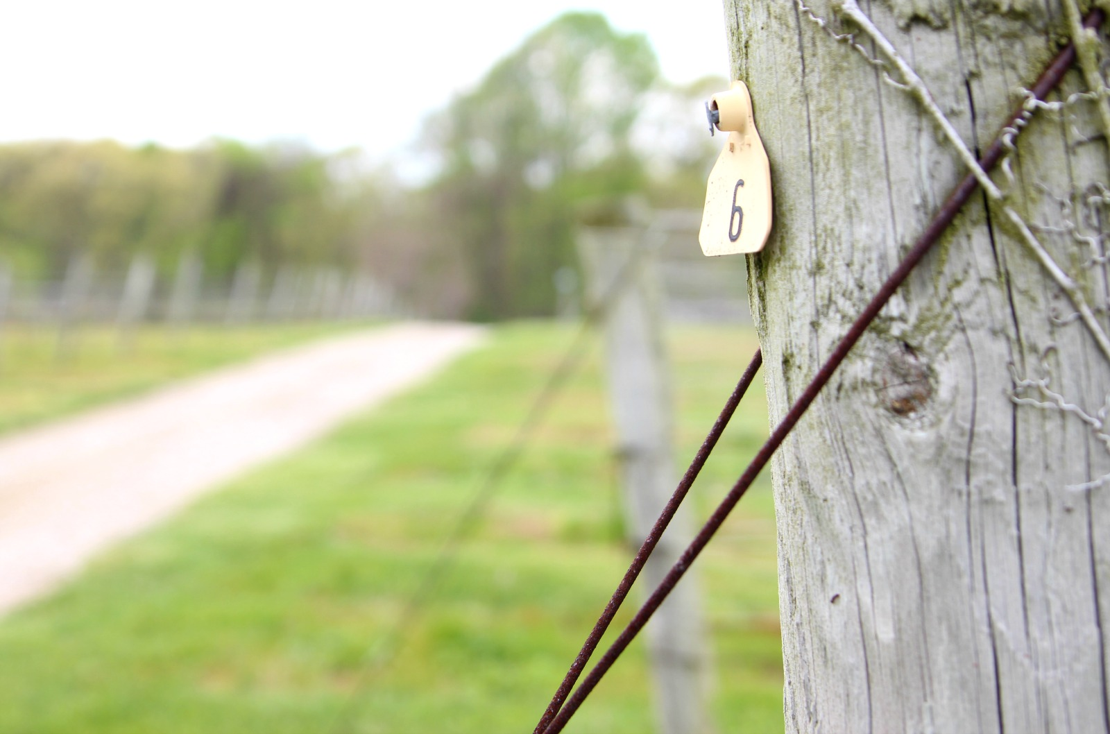 vineyard-tags