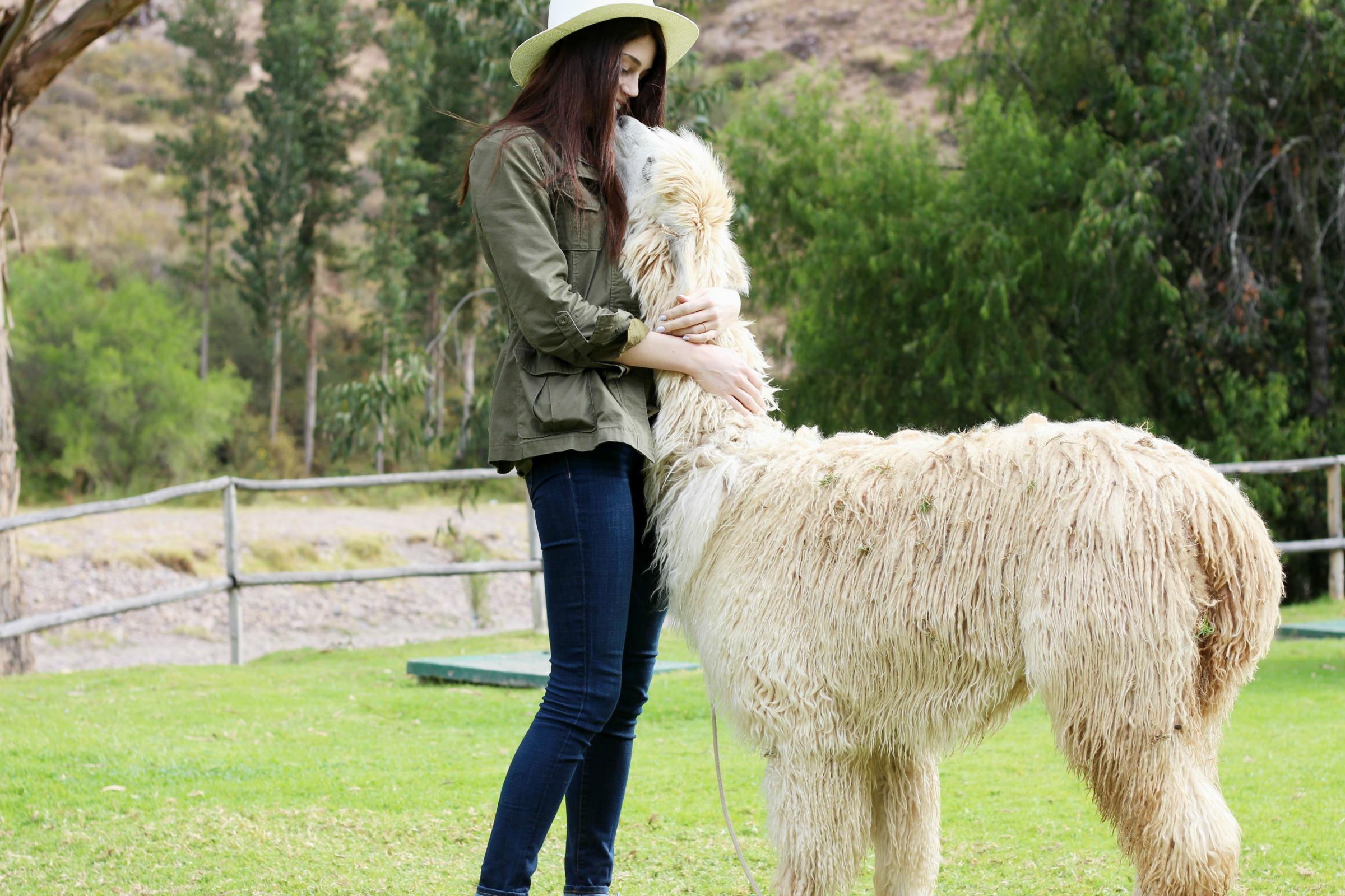 alpaca-kisses