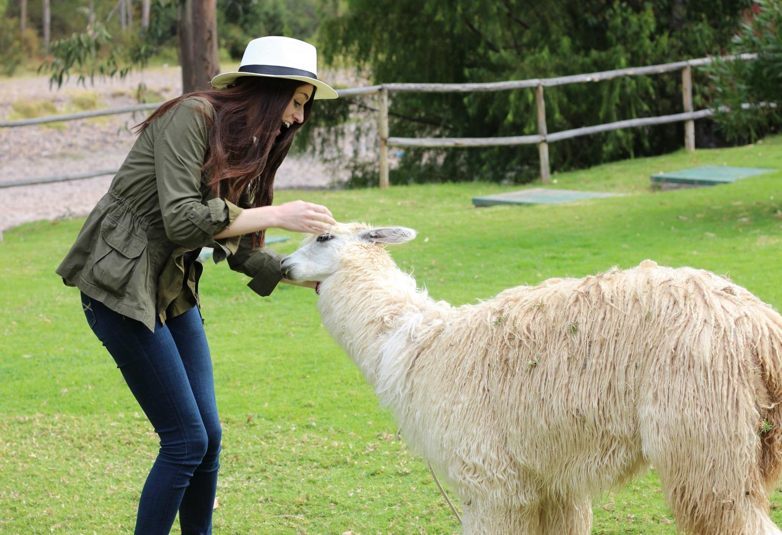 friendly-alpaca