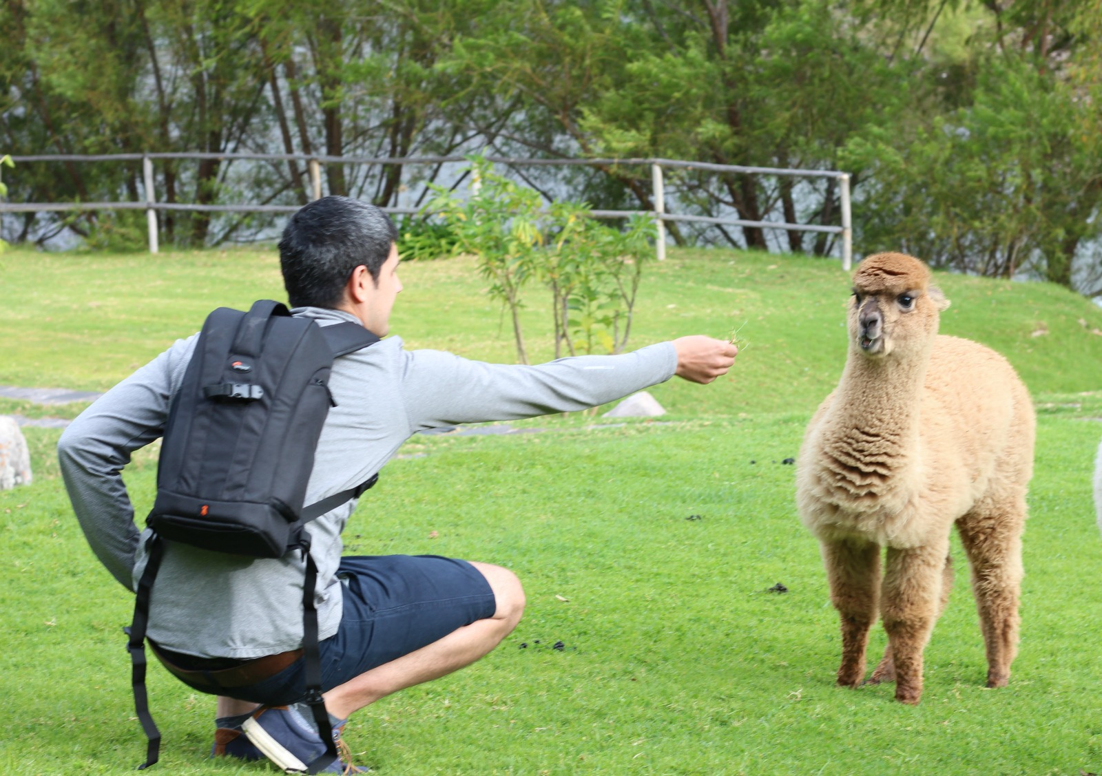 michael-trying-to-pet-alpaca